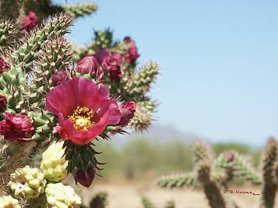 Photograph - Hola Cholla by R B Harper