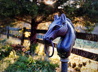 Cedar Fence Photograph - Hold Your Horses by Cricket Hackmann