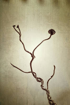 Tendrils Photograph - Holdfast Rootlet by Scott Norris