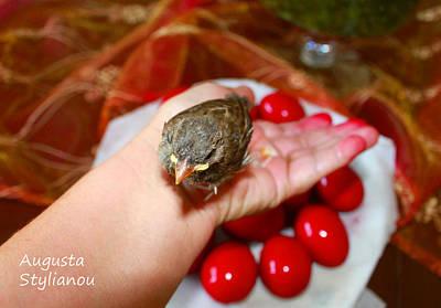Photograph - Holding A Newborn Bird by Augusta Stylianou