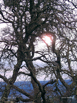 Photograph - Holding On To The Sun by Donna Blackhall