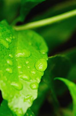 Photograph - Holding Raindrops by John Kiss