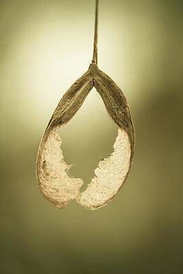Seed Macro Photograph - Hole In My Heart by Shane Holsclaw