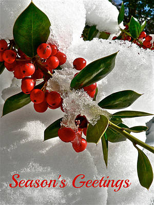 Photograph - Holiday Berries by Jean Wright
