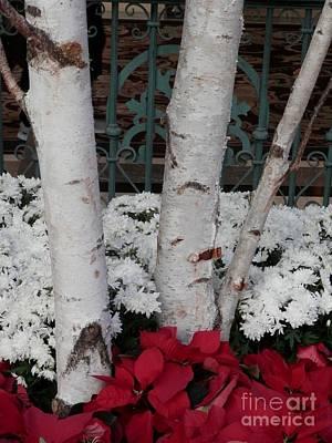 Photograph - Christmas Birch  by L Cecka