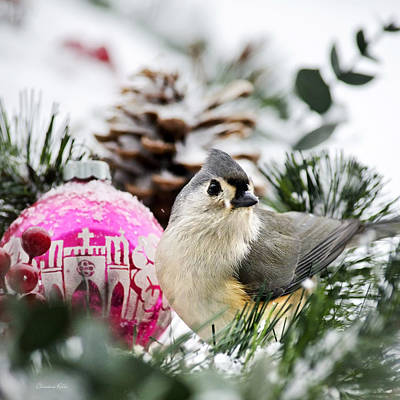 Tufted Titmouse Photograph - Holiday Bird Titmouse Square by Christina Rollo