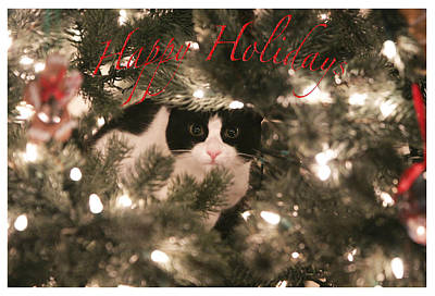 Photograph - Holiday Card by Shoal Hollingsworth
