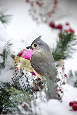 Tufted Titmouse Photograph - Holiday Cheer With A Titmouse by Christina Rollo