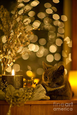 Photograph - Holiday Glow by Mike Reid