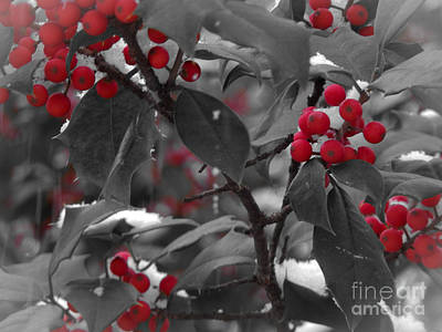 Food And Flowers Still Life - Holiday Holly by David Rucker