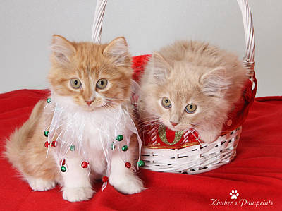 Photograph - Holiday Kittens  by Kimber  Butler