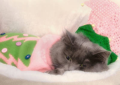 Photograph - Holiday Kitty by Joann Vitali