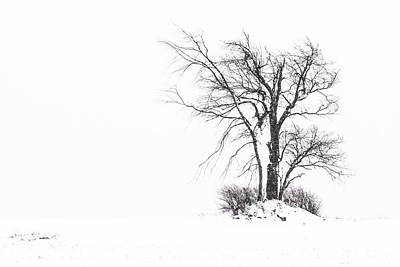 Photograph - Holland Glenwood Tree by Don Nieman