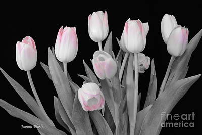 Art Print featuring the photograph Holland Tulips In Black And White With Pink by Jeannie Rhode