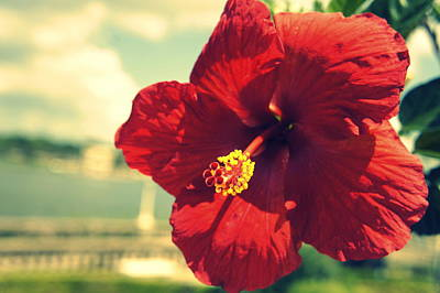 Photograph - Hollis Hibiscus by Laurie Perry