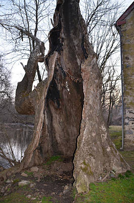 Mather Digital Art - Hollow Tree At Mather Mill by Bill Cannon