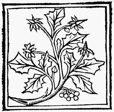 Holly, 1503 Print by Granger