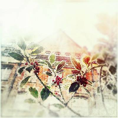 Victorian Wall Art - Photograph - Holly by Alexandra Cook