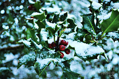 Art Print featuring the photograph Holly And New Snow by Mindy Bench