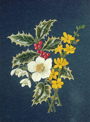 Holly, Christmas Rose, Snowdrop And Winter Jasmine Wc On Paper Print by Ursula Hodgson