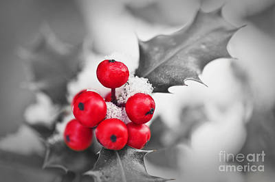 Holly Art Print by Delphimages Photo Creations