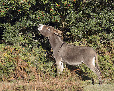 Photograph - Holly Eating Donkey by Terri Waters