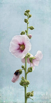 Flower Photograph - Hollyhock And Bee by Barbara McMahon