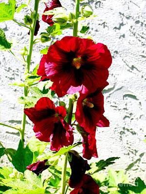 Photograph - Hollyhock Is Hollyhock by Galina Khlupina