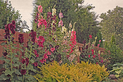 Photograph - Hollyhocks by Kay Novy