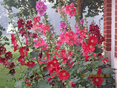 Hollyhocks Mix Art Print