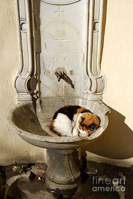 Meimei888 Digital Art - Holy Cat In A Church Basin by Eva Kaufman