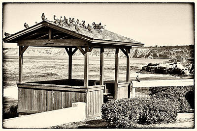 La Jolla Cove Photograph - Home By The Sea - Vintage by Peter Tellone