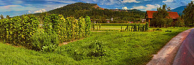 Photograph - Home Grown Slovenia by Graham Hawcroft pixsellpix