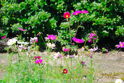 Pic Digital Art - Home Grown Wildflowers by Gabriel Jeane