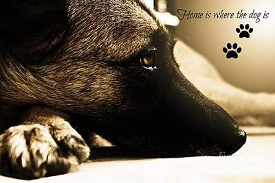 Home Is Where The Dog Is Art Print by Clare Bevan
