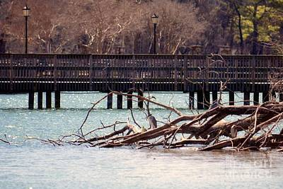 Photograph - Home Of The Black-crowned Night Heron by Maria Urso