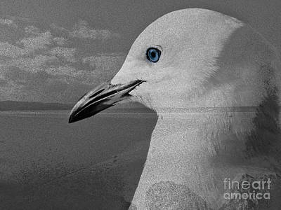 Photograph - Home Of The Sea Gull by Karen Lewis