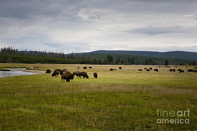 Photograph - Home On The Range by Belinda Greb