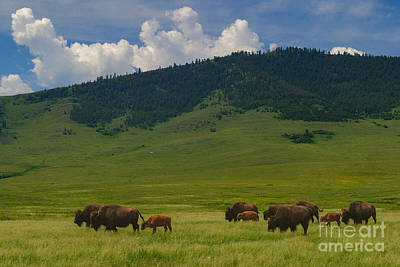 Photograph - Home On The Range by Charles Kozierok