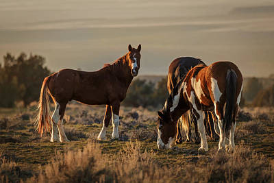 Photograph - Home On The Range by Wes and Dotty Weber