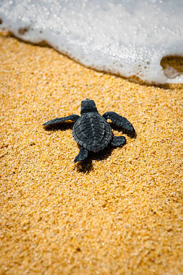 Turtle Photograph - Home by Sebastian Musial