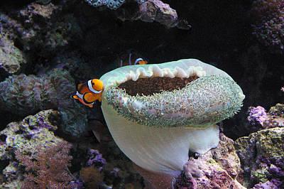 Clown Fish Photograph - Home Sweet Home by Sherri Krause