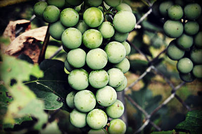 Photograph - Homegrown Grapes by Amber Summerow