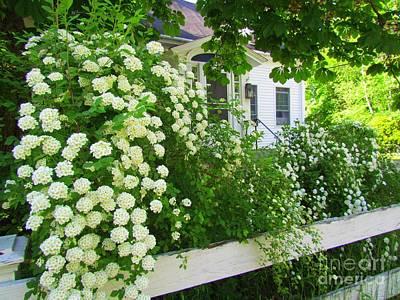 Screen Doors Photograph - Homestead Bridal Wreath by Elizabeth Dow