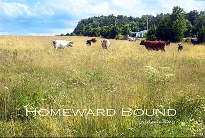 Photograph - Homeward Bound by Lena Wilhite
