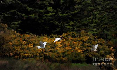 Photograph - Homeward by Melinda Hughes-Berland