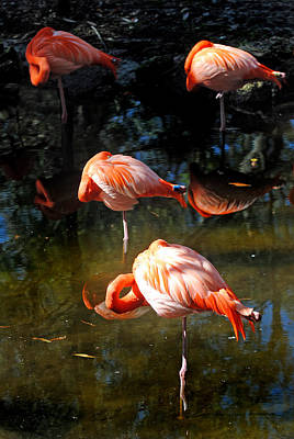 Photograph - Homosassa Springs Flamingos 5 by Jeff Brunton