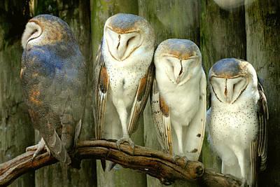 Photograph - Homosassa Springs Snowy Owls 2 by Jeff Brunton