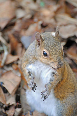 Photograph - Homosassa Springs Squirrel 2 by Jeff Brunton