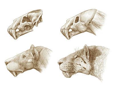 Homotherium Sabre-toothed Cat Art Print